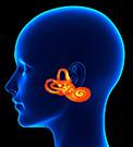 Middle/Inner Ear